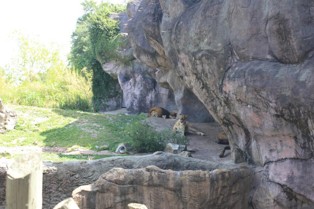 Busch Gardens Tampa Bay Zoo